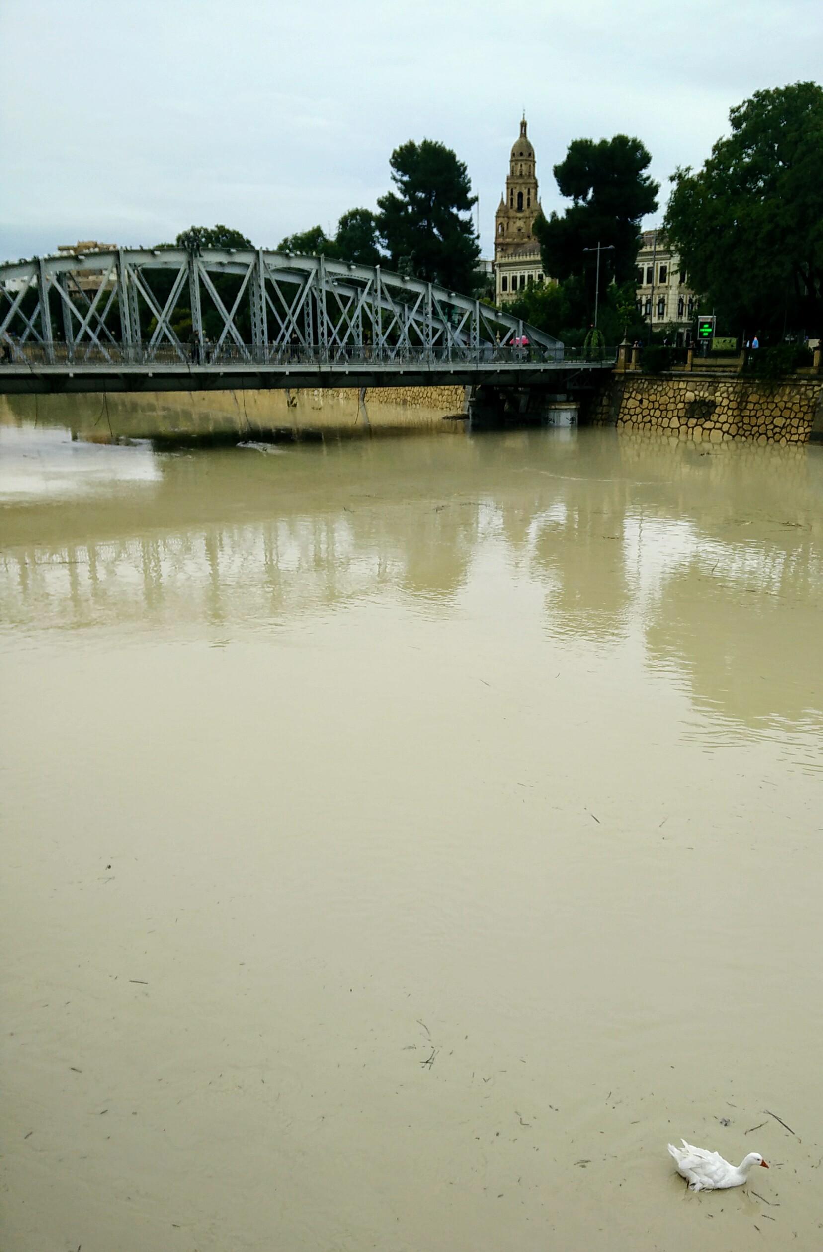 Inundaciones en redes sociales.